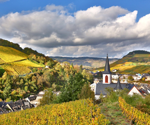 Mosel in summer